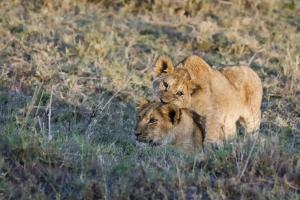 Photographic Safari in Africa